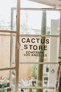 hot_cactus_06.jpg