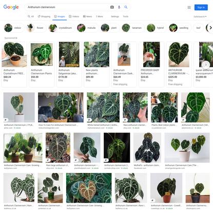 Anthurium clarinervium - Google Search