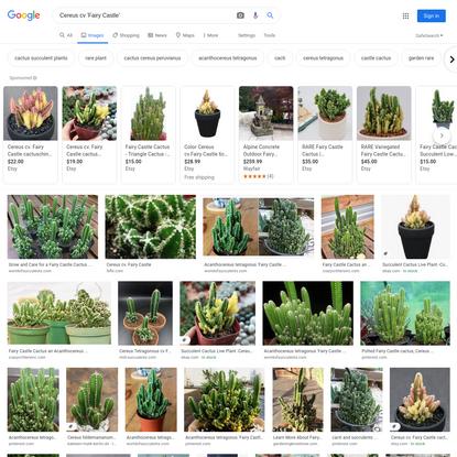 Cereus cv 'Fairy Castle' - Google Search