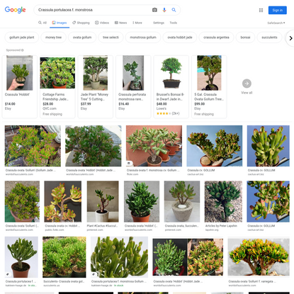Crassula portulacea f. monstrosa - Google Search