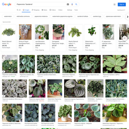 Peperomia 'Sandersii' - Google Search