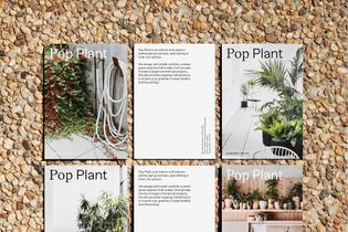popplant_6.jpg