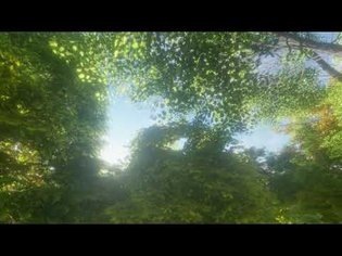 Forest Bathing Nature Therapy 3hours