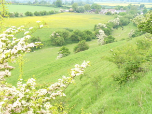 looking_down_the_combes_-_geograph.org.uk_-_816204.jpg
