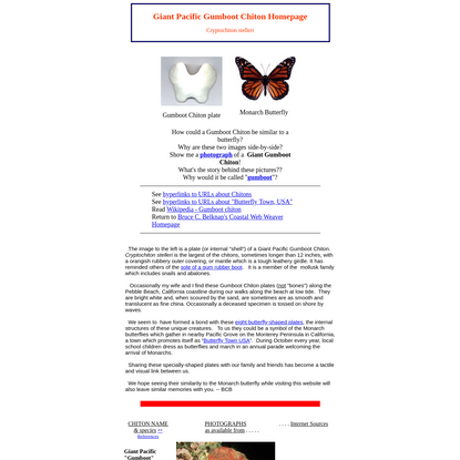 The Giant Gumboot Chiton Homepage