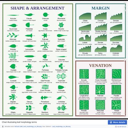 Glossary of leaf morphology - Wikipedia