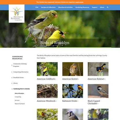 Birds of Brooklyn - Brooklyn Botanic Garden