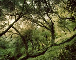 5f8da4d971e9cc5ed9f8c0e7_thisispaper-landscapes-felix-odell-photography-4.jpg