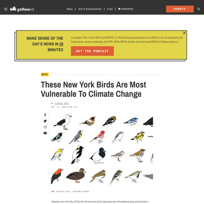 These New York Birds Are Most Vulnerable To Climate Change