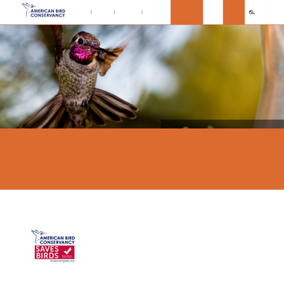 Stop Birds Hitting Windows | American Bird Conservancy