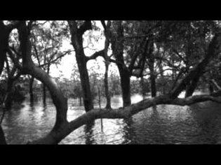 Enno Velthuys - Swamp