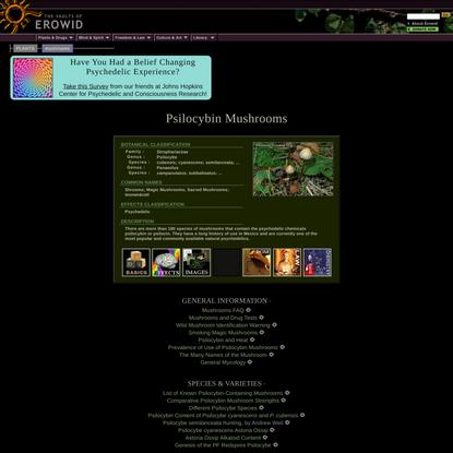 Erowid Psilocybin Mushroom (Magic Mushrooms) Vault