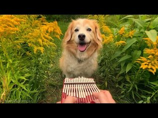Here Comes The Sun on a Kalimba