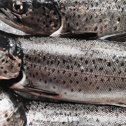 """Tonje Thilesen on Instagram: """"catch of the day! trout."""""""