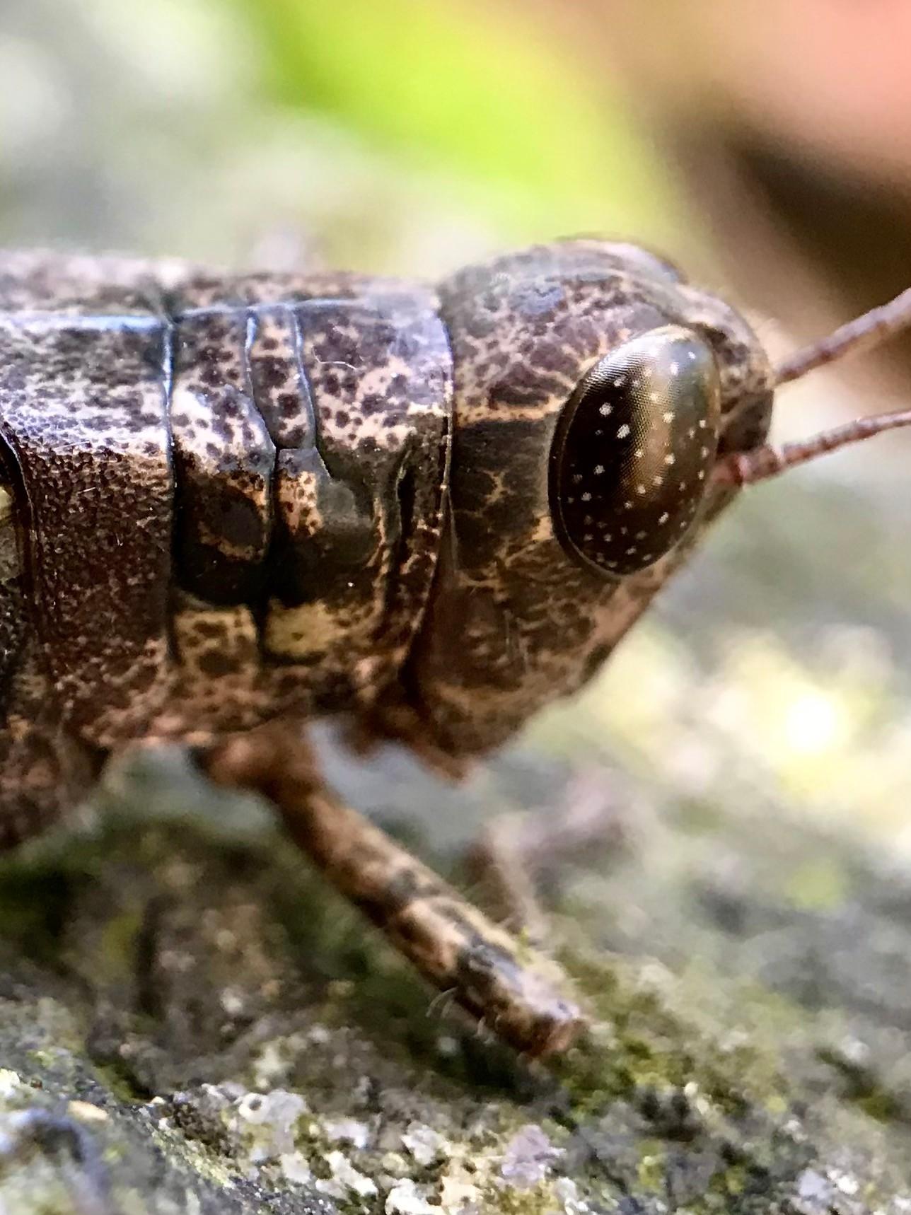 Grasshoppa!