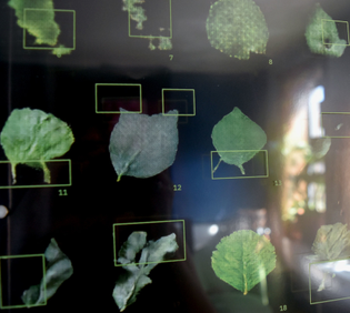 """closeup: A grid of machine generated leaves. The leaves are dark green against a black background. On top of the leaves are bright neon green markings pointing out the """"glitches"""" or flaws of each leaf."""