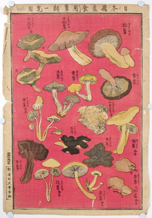 Chart of Edible Japanese Mushroom Types   ,   Early 20th Century