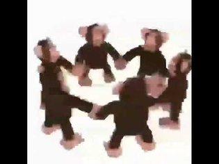 Happy Monkey Circle