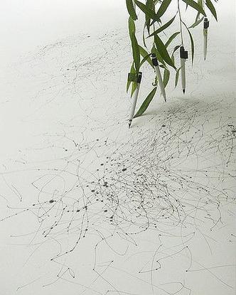 Tree Drawings by Tim Knowles