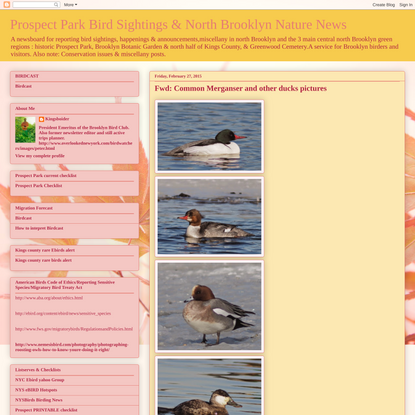 Fwd: Common Merganser and other ducks pictures