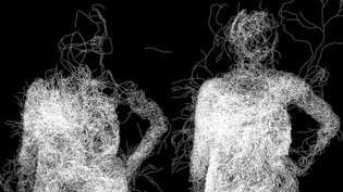 Mycelium Processing Program
