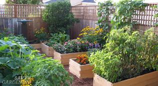 planting-a-raised-bed.jpg?fit=657-360-ssl=1