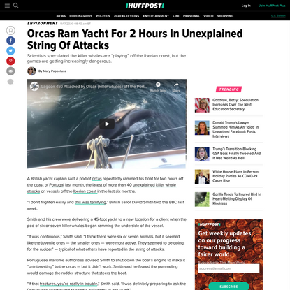 Orcas Ram Yacht For 2 Hours In Unexplained String Of Attacks
