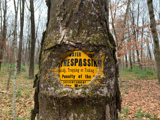 Trees swallowing Trespassing Signs