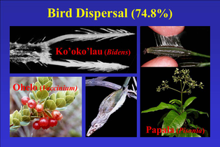 bird_dispersal.jpg