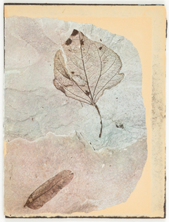 Joseph Cornell. Untitled (two fossilized leaves), n.d. Collage.