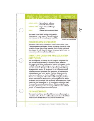vulpia bromoides & myuros