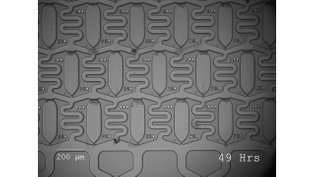 Leukemia cell resistant colony on microfluidic-chips