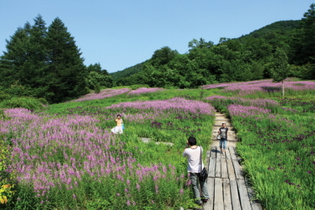 Summer Scent – Korea Botanic Garden