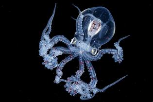 octopus-wonderpus-blackwater-008.jpg