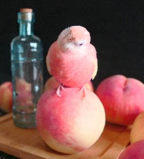 peach bird