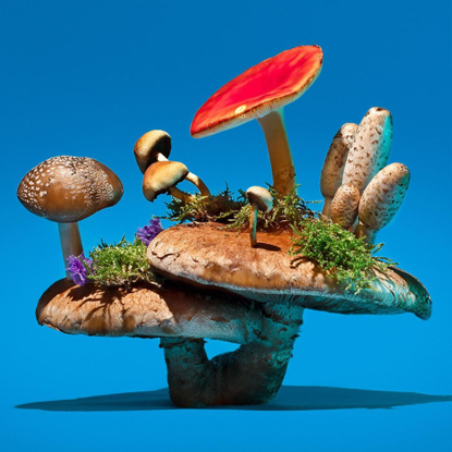"""phyllis ma 🦋🍄🌈 on Instagram: """"Mushrooms & Friends would not be possible without FRIENDS🧚🏻♂️🐸🦋🐞🐛🧚🏻♂️ . 🐌 For issue 2, I'd l..."""