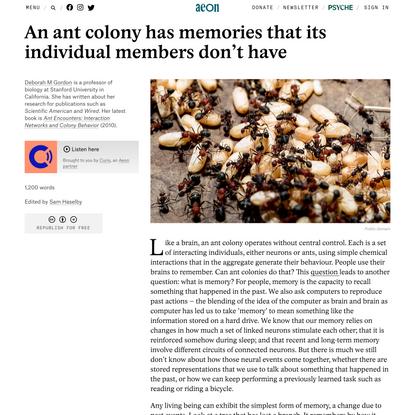 An ant colony has memories that its individual members don't have – Deborah M Gordon | Aeon Ideas