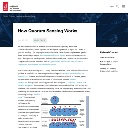 How Quorum Sensing Works   ASM.org