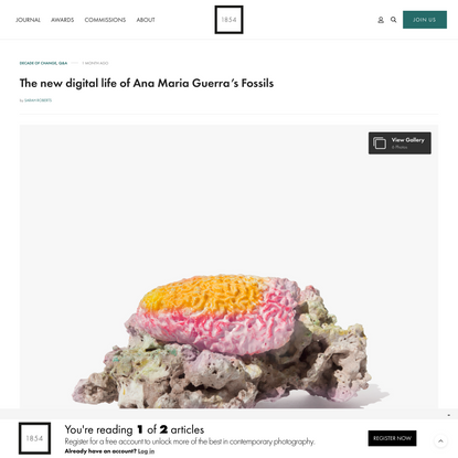The new digital life of Ana Maria Guerra's Fossils | 1854 Photography