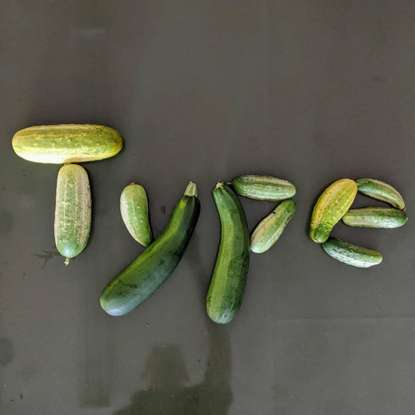 """The Design Office on Instagram: """"Cucumber type from @occupantfonts, naturally. #Repost @occupantfonts ・・・ Cucurbitmap letter..."""