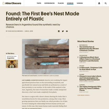 Found: The First Bee's Nest Made Entirely of Plastic