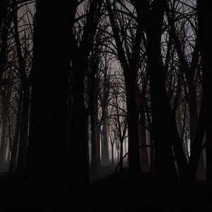 The Spirits in This Forest Are Older Than Your Gods