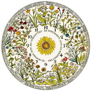 Carl Linnaeus flower clock