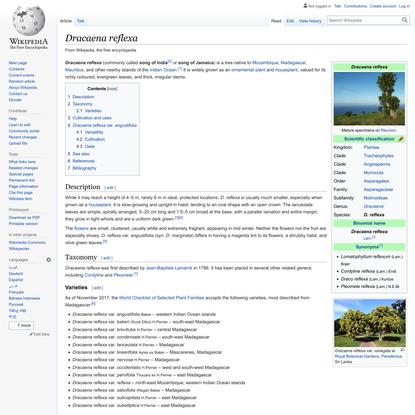 Dracaena reflexa - Wikipedia