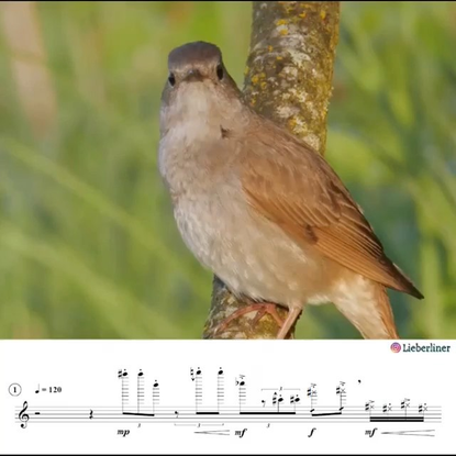 """Dust-to-Digital on Instagram: """"Alexander Liebermann is a composer and teacher who transcribes animal sounds for use in ear t..."""