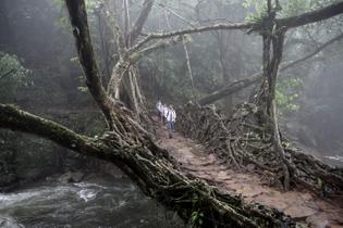 school-boys-living-root-bridge-meghalaya-india.jpg