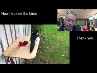 Birds exchange litter for food, the training.