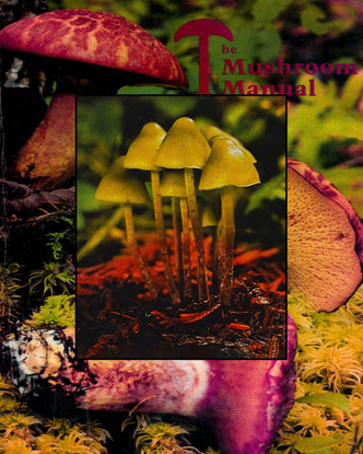 Behind the rise in fungi fashion lies a psychedelic revolution