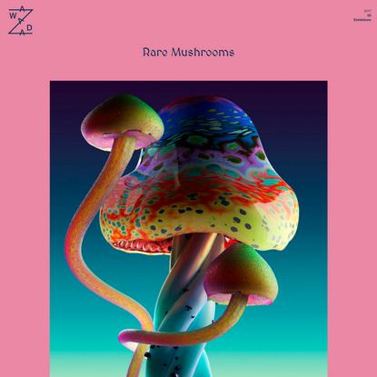Rare Mushrooms : Jonathan Zawada