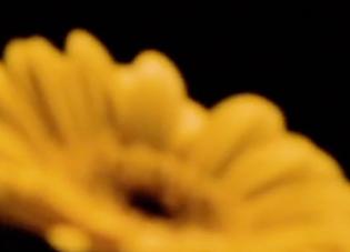 screen-shot-2021-01-05-at-5.49.47-pm.png